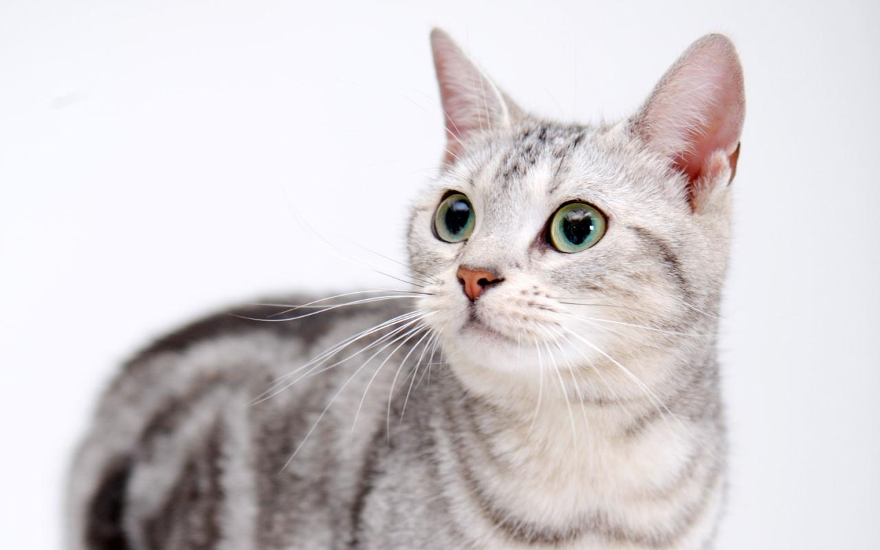 Стерилизация кошек когда лучше делать - 2c276